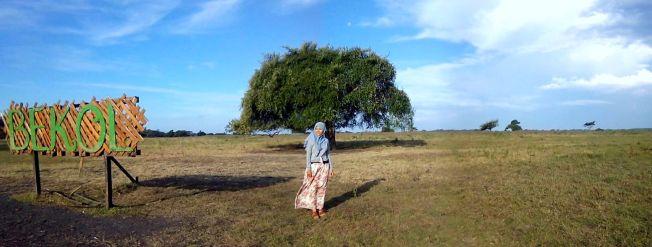 Bekol, dan pohon jomblo